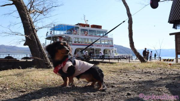 十和田湖 奥入瀬渓流 犬