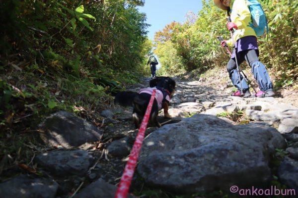 栗駒山 犬連れ登山 2019