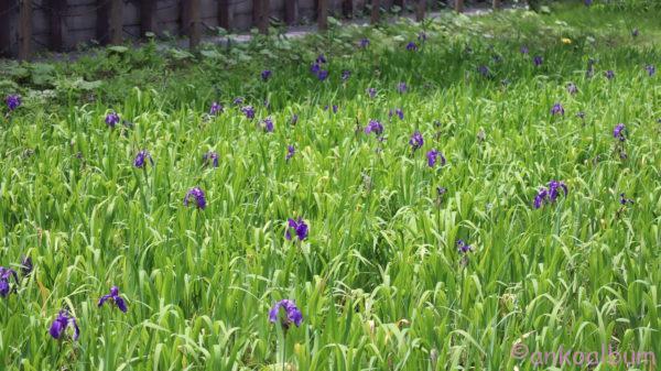 尾入野湿生植物園