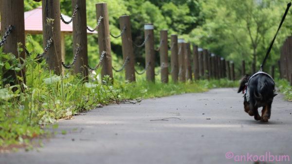 カニンヘンダックスお散歩