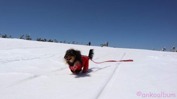 カニンヘンダックス雪遊び