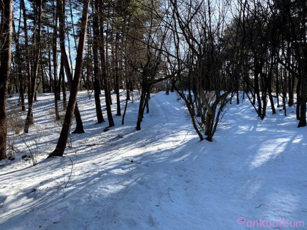 つどいの森 冬