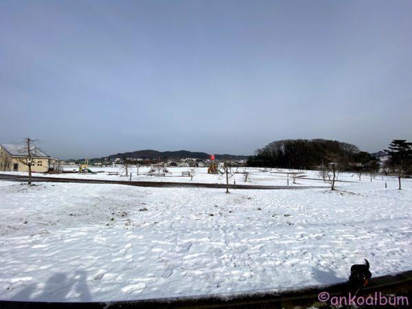 高松の池公園