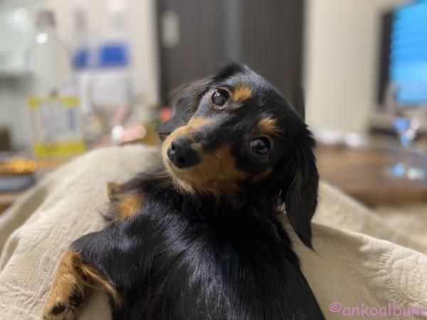 カニンヘンダックス1歳2ヶ月