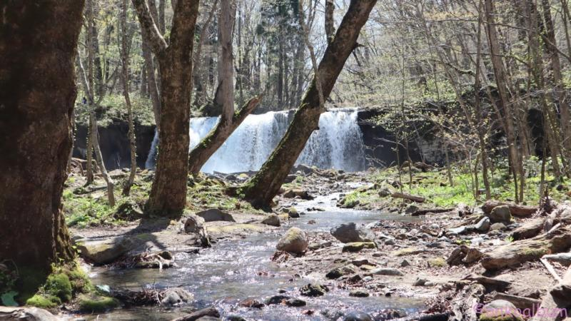 奥入瀬渓流 犬と散策