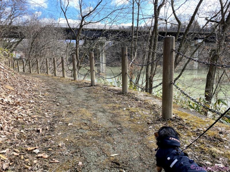 犬の散歩 散策路