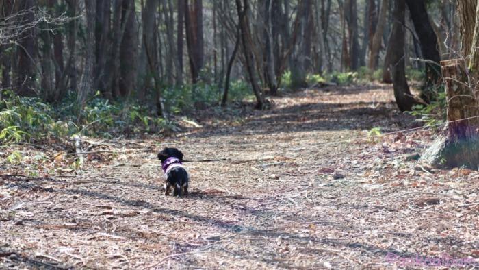 愛犬とトレッキング