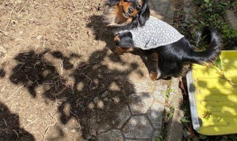 愛犬のための庭づくり