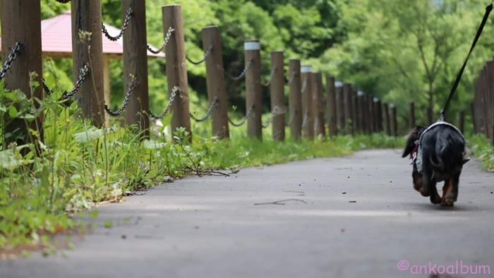 カニンヘンダックス散歩