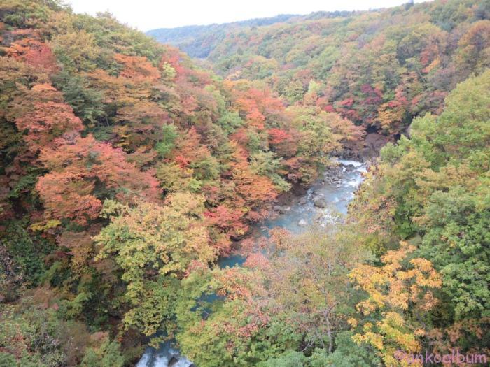 森の大橋 紅葉