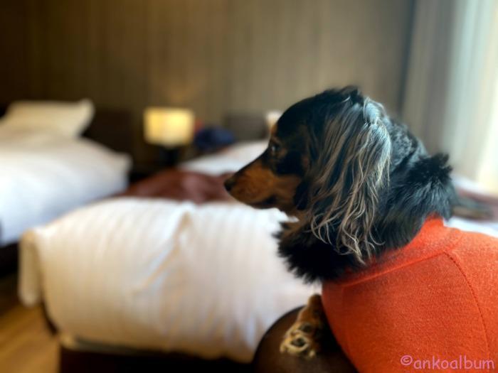 犬と一緒に泊まれる宿
